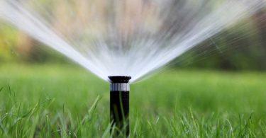 Gartenbewässerung: Wichtig für neue Pflanzen
