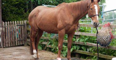 Hufverletzungen bei Pferden: Homöopathie hilft