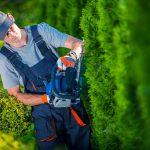Alternativen zur Thuja: Für und Wider der Lieblingsheckenpflanze