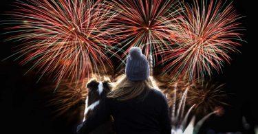 Hunde und Silvester: Die Angst vor Knallern homöopathisch behandeln