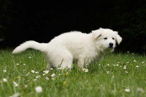 Durchfall bzw. Diarrhoe bei Hunden homöopathisch behandeln