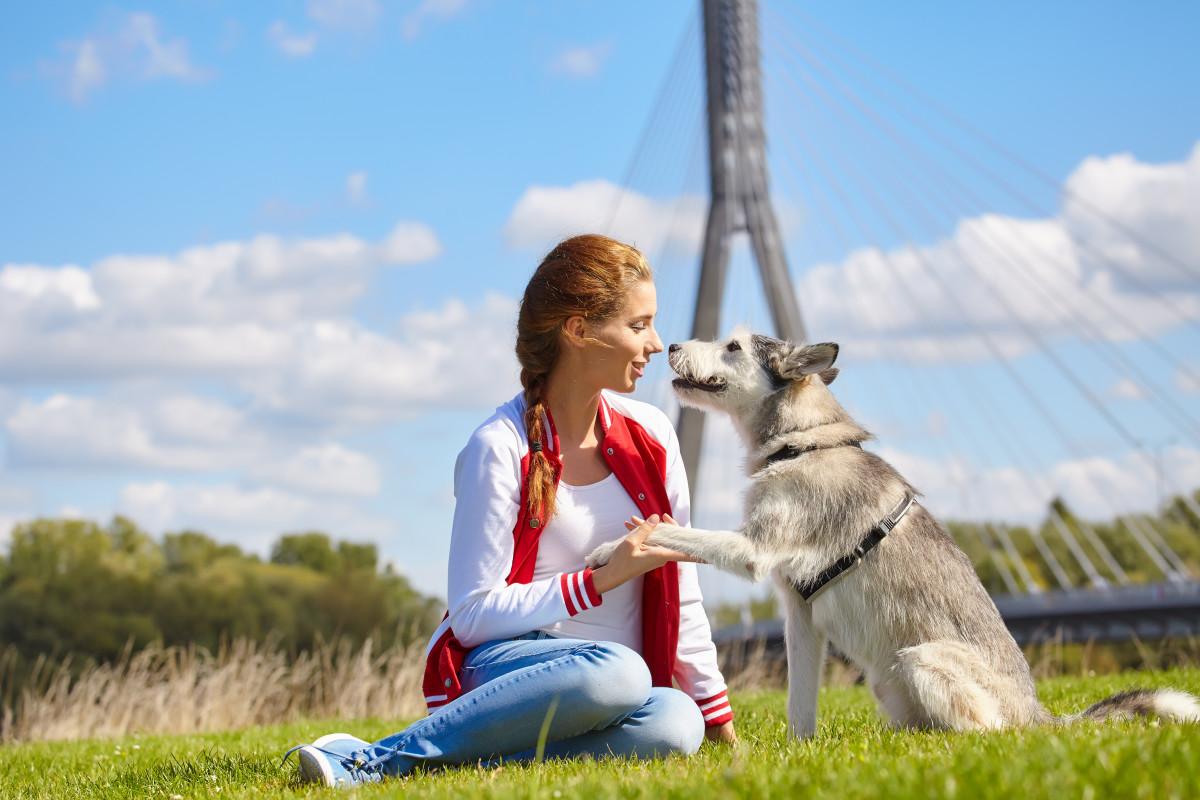 Sprechen mit Tieren: Tierkommunikation leicht gemacht?