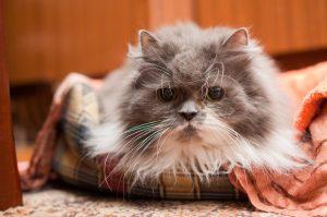Homöopathie für Katzen: Alterserscheinungen