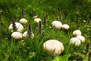 Die fantastische Welt der Pilze