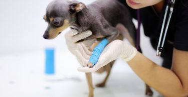 Verstauchungen bei Hunden homöopathisch behandeln