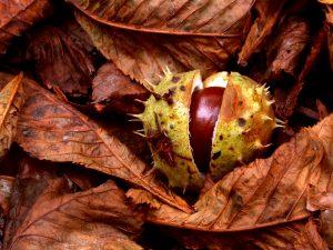 Basteln im Herbst: Naturwebrahmen aus Kastanien
