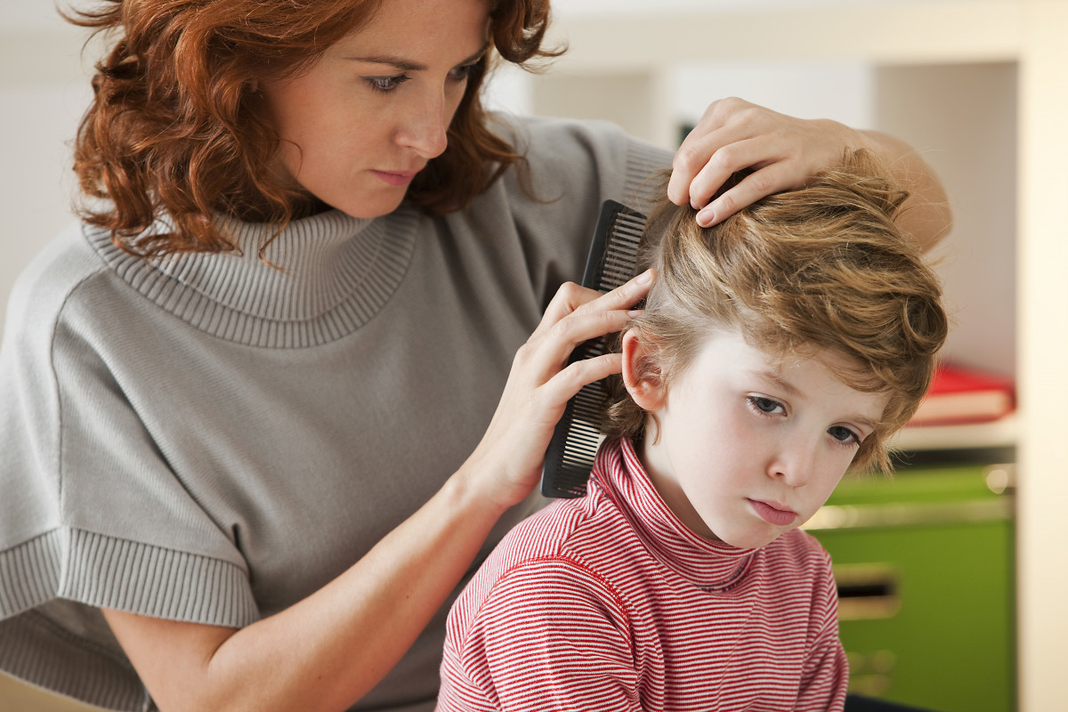 Kopfläuse: Müssen Eltern einen Kopflausbefall ihrer Kinder melden?