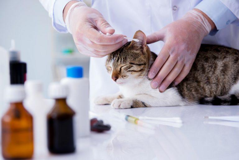 Hautkrankheiten bei Katzen homöopathisch behandeln