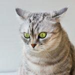 Katzenpsychologie und Tierhomöopathie bei Stress unter Katzen