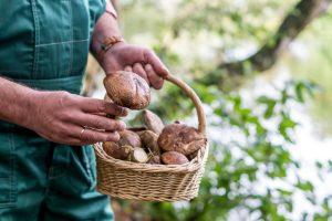 Prinzipien zum Pilze sammeln