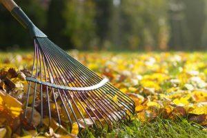 Gartenarbeit: Denken Sie im Herbst an Ihren Arbeitsschutz!