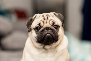 Woran Sie Stress bei Ihrem Hund oder Ihrer Katze erkennen