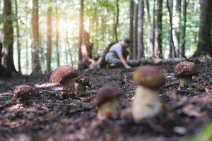 Ist Pilze sammeln für Anfänger ein Wagnis?