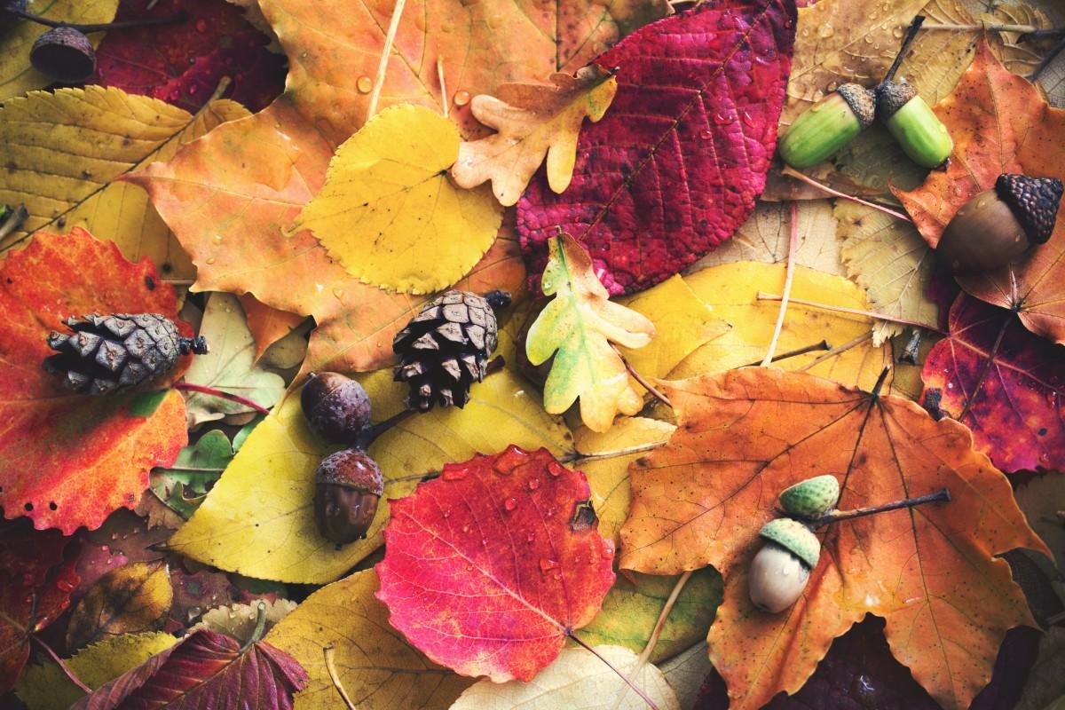 Herbstbilder basteln aus Blättern