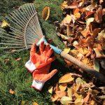 Gartenarbeit im Herbst: Rasenpflege - Drei Schritte für den optimalen Winterschutz
