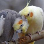 Homöopathische Mittel für Vögel