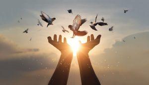 Das neue Spektrum der Homöopathie: Vögel