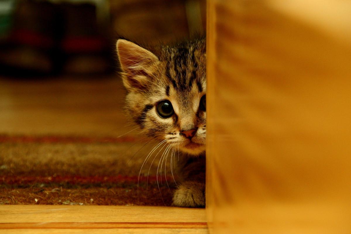 Übermäßige Angst bei Katzen homöopathisch regulieren