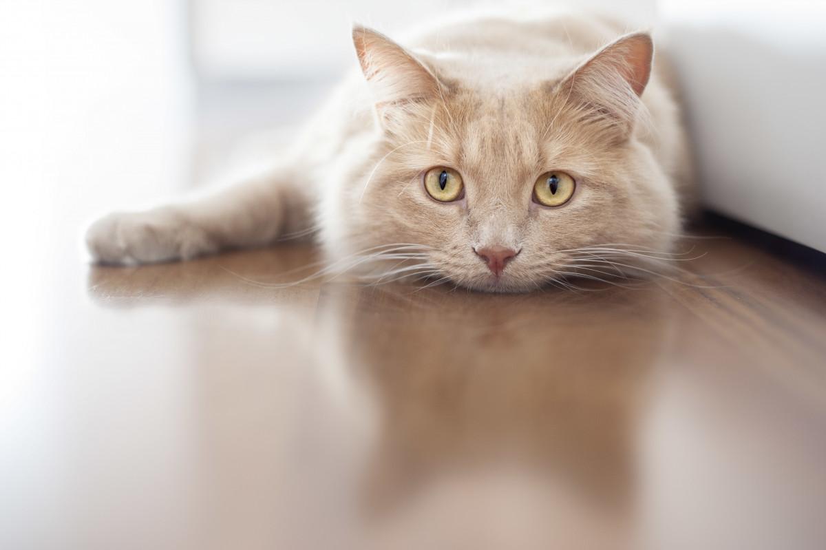 Homöopathie für Katzen: Appetitlosigkeit