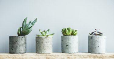 Zimmerpflanzen umtopfen: Mit dieser Schritt-für-Schritt-Anleitung kinderleicht