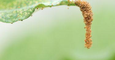Spinnmilben, Wollläuse, Schildläuse und Co: Keine Macht den Schädlingen!