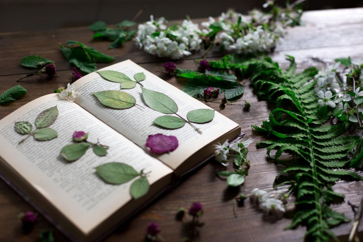 Kindergeburtstag: Einladung basteln mit gepressten Blumen (Teil 20)