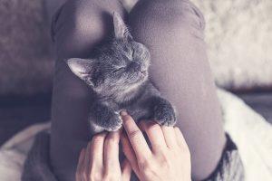 Neue Katze - Was soll der Katzenhalter beachten?