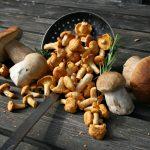 Wann ist Pilzzeit?