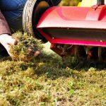 Rasen kalken und was Sie noch gegen Moos tun können