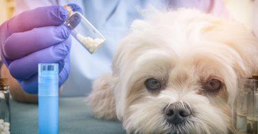 Homöopathische Arzneimittel für Hunde: Sepia