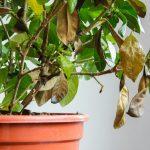 Weiße Fliege: So schützen Sie Ihre Zimmer- oder Gewächshauspflanzen