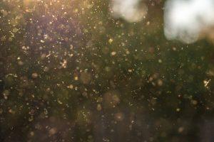 Pollenkalender hilft Heuschnupfen-Geplagten