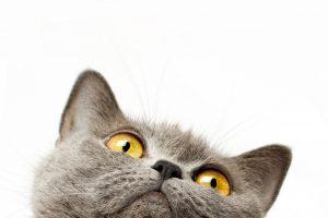 Die unerziehbare Katze