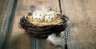 Wachteleier: Eine diätetische Delikatesse zu Ostern