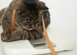 Übergewichtige Haustiere - Was können Sie dagegen tun?