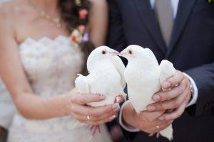 Hochzeitstauben - weiße Tauben versprechen Glück