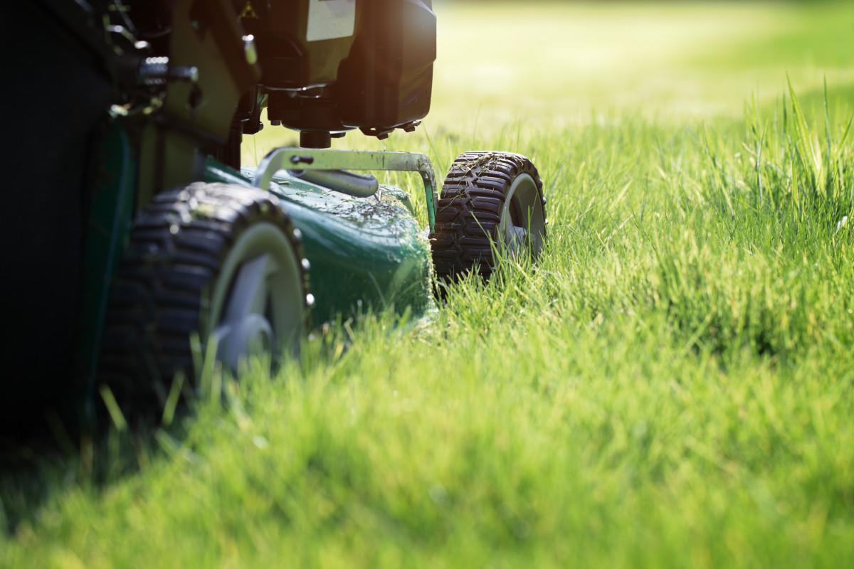 Rasenpflege: Fünf Tipps für einen gesunden und schönen Rasen