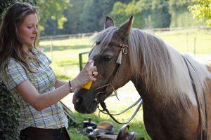 Bisse und Insektenstiche beim Pferd homöopathisch behandeln