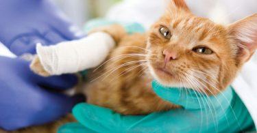 Homöopathie für Katzen – Verstauchung mit Homöopathie behandeln