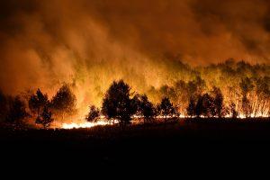 Waldbrandgefahr im Sommer erhöht - so vermeiden Sie Waldbrände