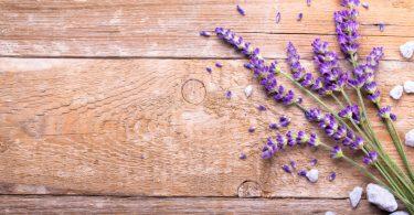 Lavendel in der Küche: Köstliches Rezept für Olivencreme