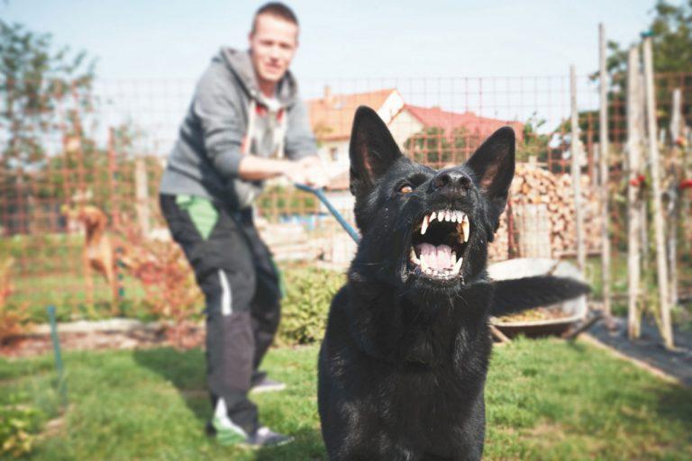 Aggressives Verhalten beim Hund homöopathisch behandeln