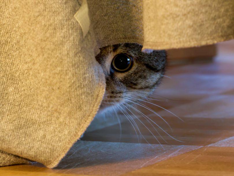 Angst bei Katzen homöopathisch behandeln