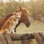 Tiere im Traum und was sie bedeuten: Hunde und Pferde