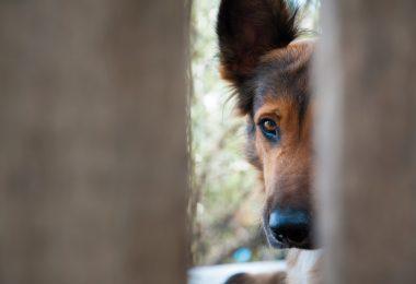 Angst vor Hunden: Welche homöopathischen Mittel kommen infrage?