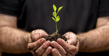 Pflanzen in unserem Leben: Welche Rolle spielen sie?