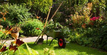 Gartentipps im Juli: Heiße Tage für Ihren Garten