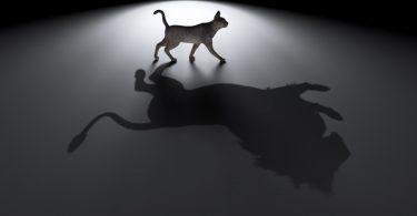 Die Katze im Traum: was sie bedeutet