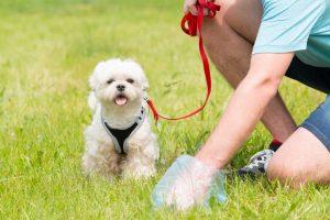 Bedeutung von Farbe und Konsistenz von Durchfall bei Hunden