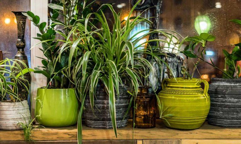 Zu Hause wohnen: Gestalten Sie mit Grünpflanzen und Dekos eine Oase